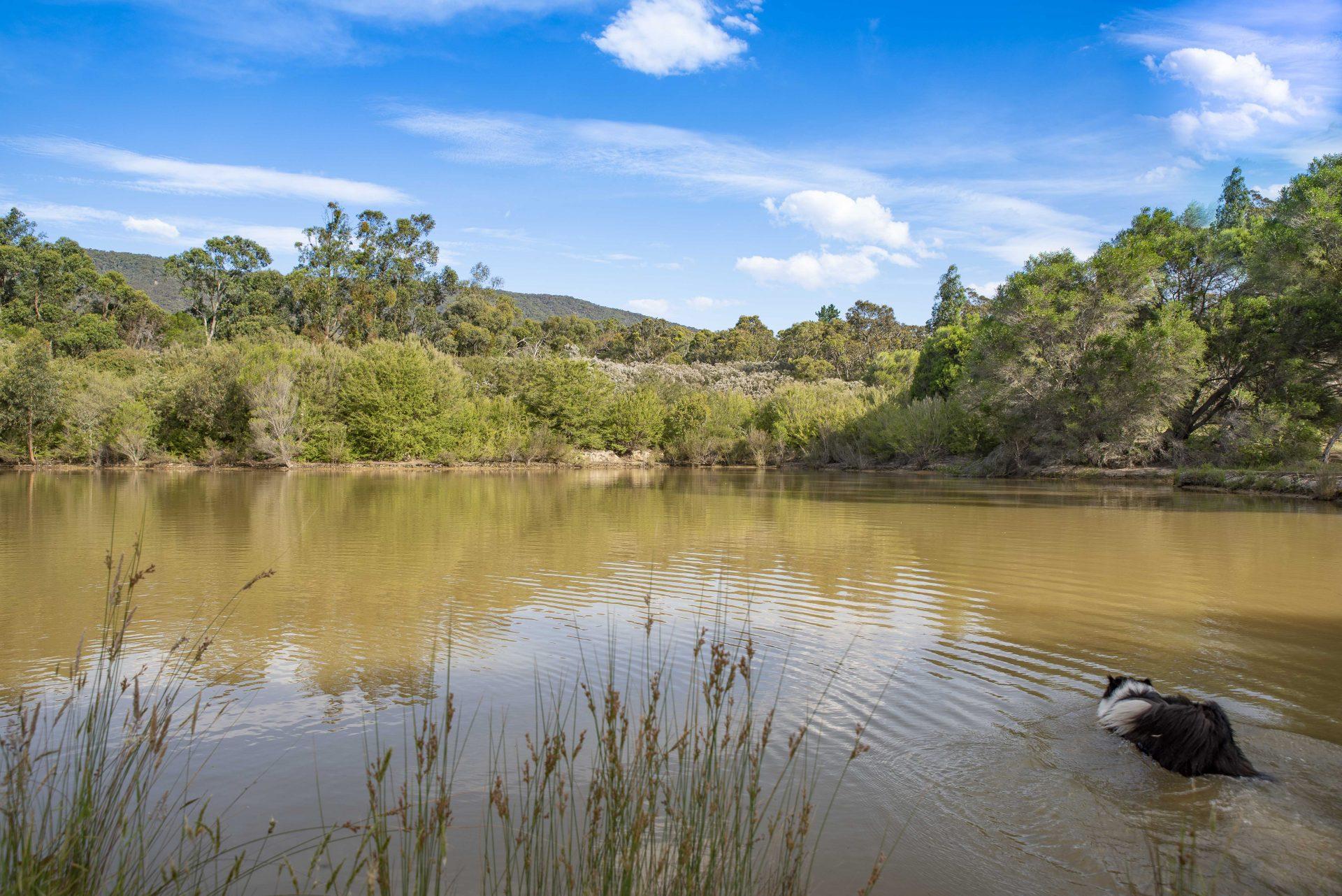 Paul & Julie – Owners Yarra Valley Pet Resort Victoria