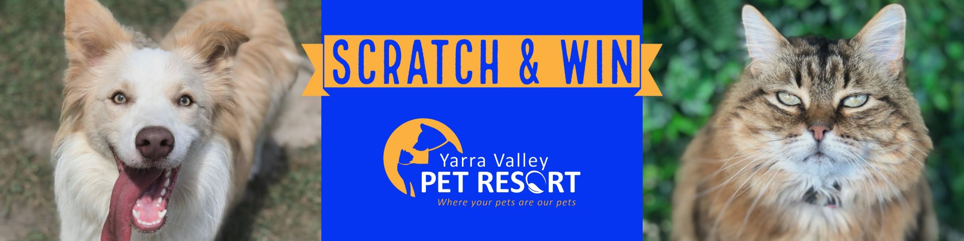 Pet Boarding Scratch Card Discounts And Rewards Yarra Valley Pet Resort
