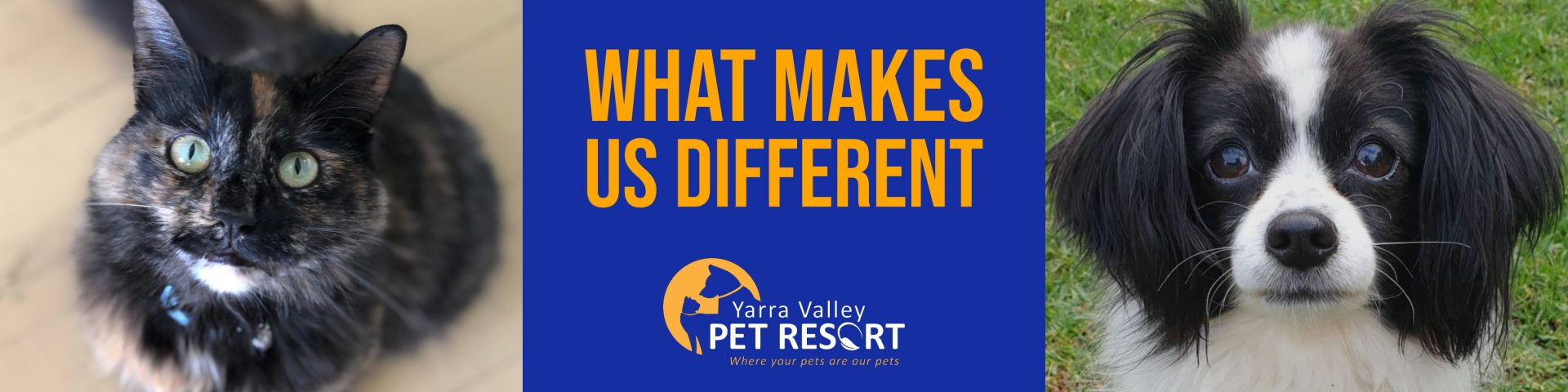 What Makes Us Different To Other Pet Boarding Kennels In Melbourne.