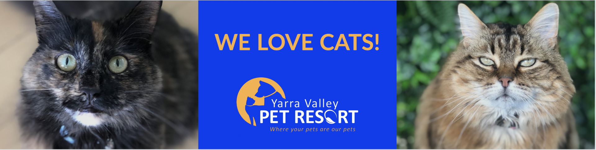 Cats Cats Cats – We Love Cats At Yarra Valley Pet Resort Healesville