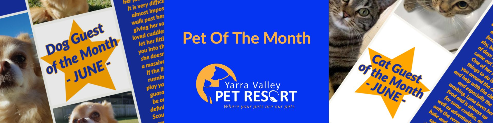 PET OF THE MONTH AWARD – Yarra Valley Pet Resort