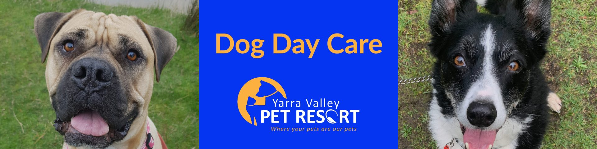 Doggie Day Care Yarra Valley Healesville Sanctuary